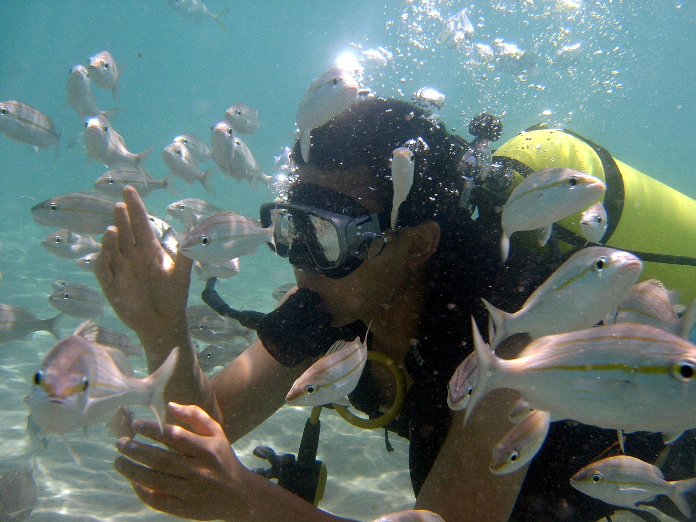 Mergulho em Maracajaú