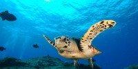 Tartaruga Marinha Noronha